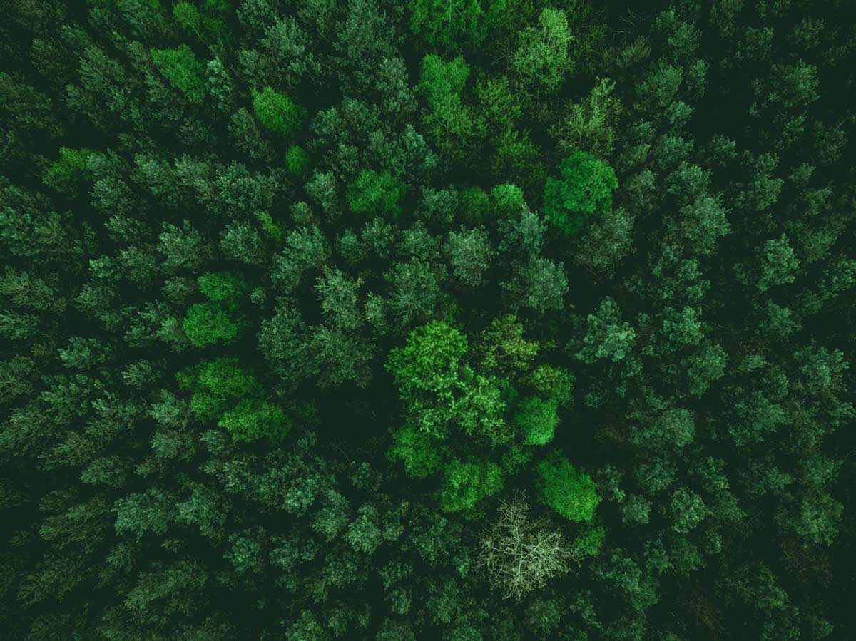 A dark green forest as seen from above.