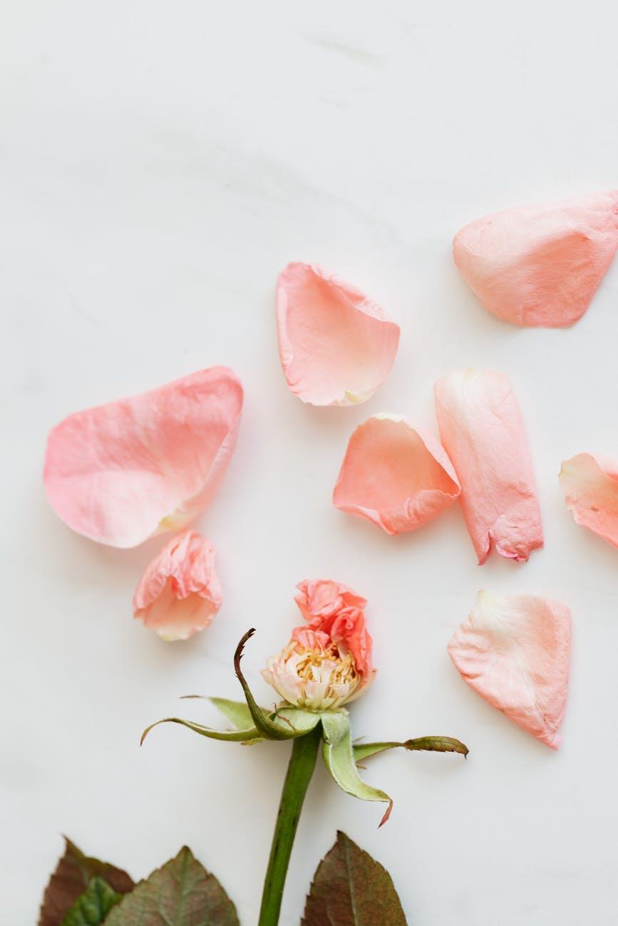 A pink flower that has fallen apart.